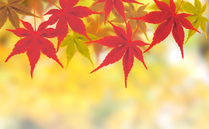 秋に気をつけたい毛穴トラブルの対策 | 秋の毛穴ケアの方法